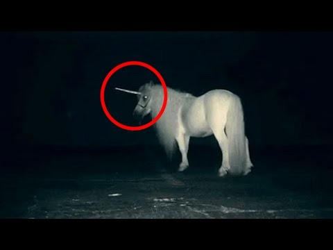 Are Unicorns Real Watch This Video To Find Out