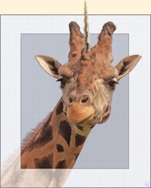 Are We Lumberjacks   Giraffe Unicorn