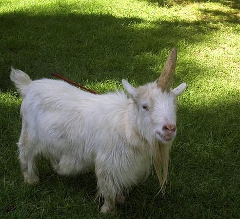 Funday Sunnies  A Magical Unicorn · Off