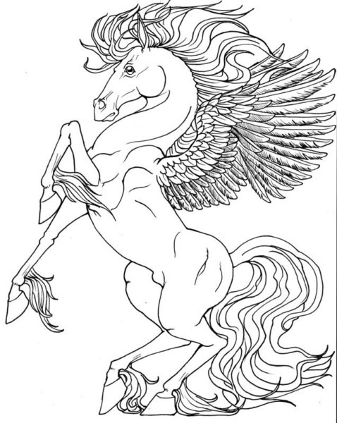 Coloring Pages Unicorns Elegant Fairy Boy With Unicorn Coloring
