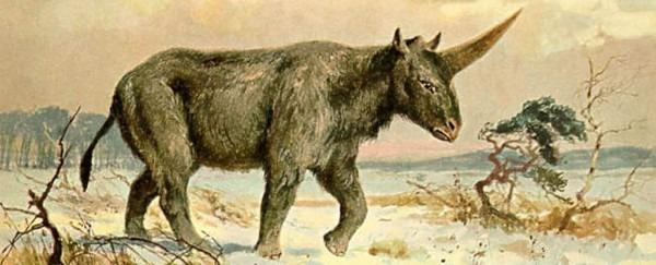 Extinct 'siberian Unicorn' May Have Lived Alongside Humans, Fossil
