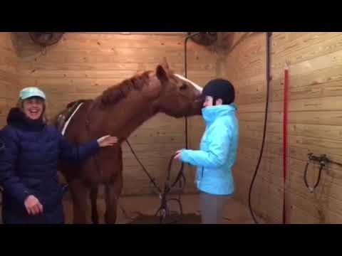 State Line Tack Gives Back To Unicorn Therapeutic Riding!