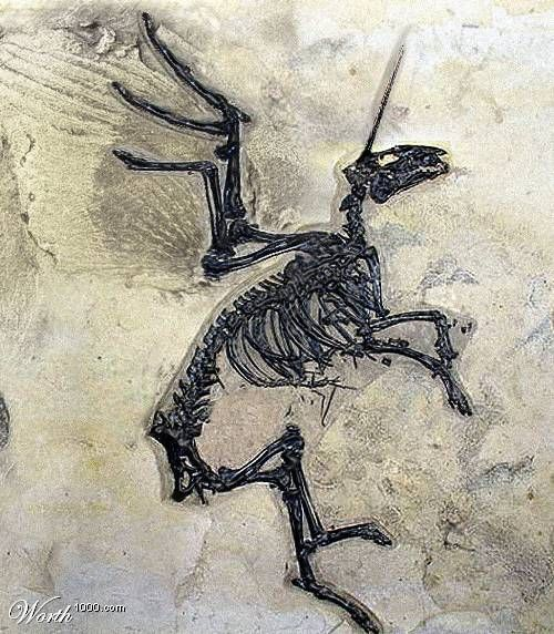 Unicorn Skeleton Fossil  There's No Way This Is Real But It Looks