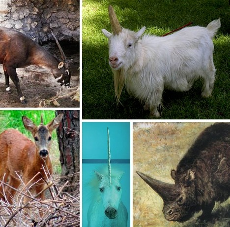 Animals With Unicorn Horns