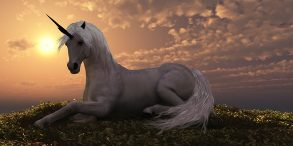 Why Are Unicorns So Popular  🦄 The Trend Explained
