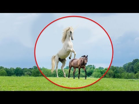 5 Times Real Unicorns Caught On Camera & Spotted In Real Life