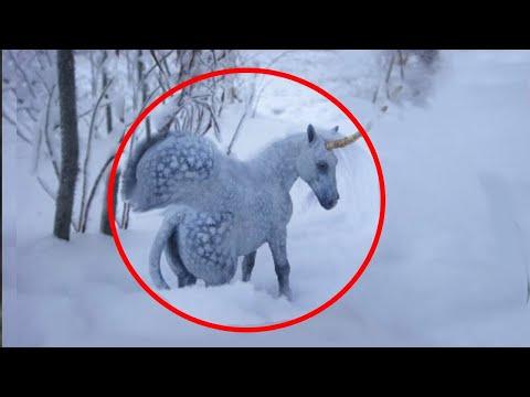 5 Unicorns Caught On Camera ♢   Real Life Unicorns