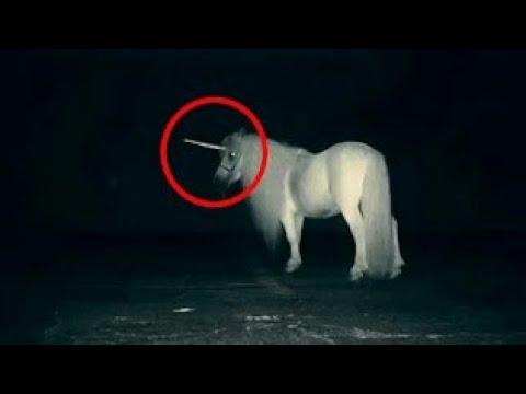 5 Unicorns Caught On Camera