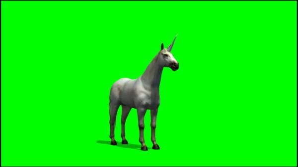 Ilustracion Unicornio Stock Video Footage