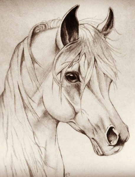 Image Result For Unicorn Head Drawing In Pencil