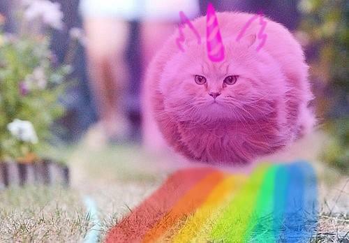 Pink Fluffy Unicorns Dancing On Rainbows  'ddd