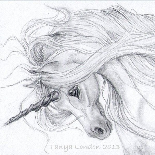 Unicorn Realistic Drawing