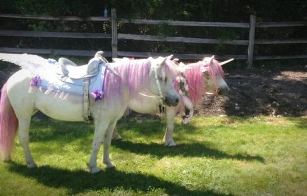 Rent 'unicorn' Ponies For Birthday Parties