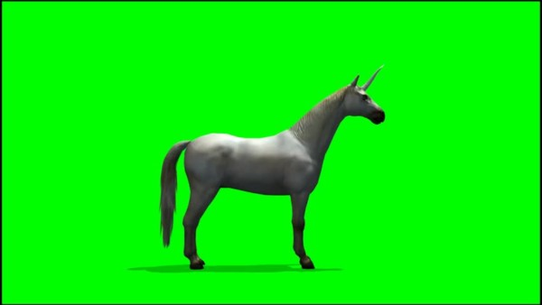 Unicorn Forest Stock Video Footage