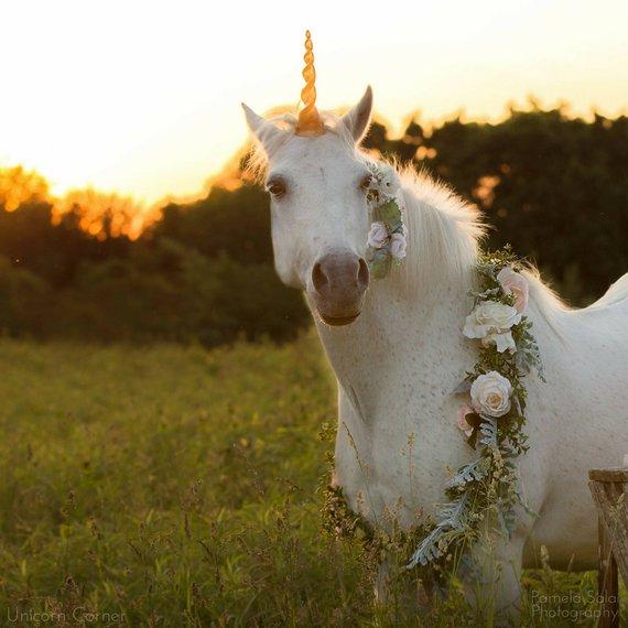 Unicorn Horse Costume   Unicorn Horn For Horse   Unicorn Horn