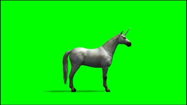 Unicorn Isolated Stock Video Footage