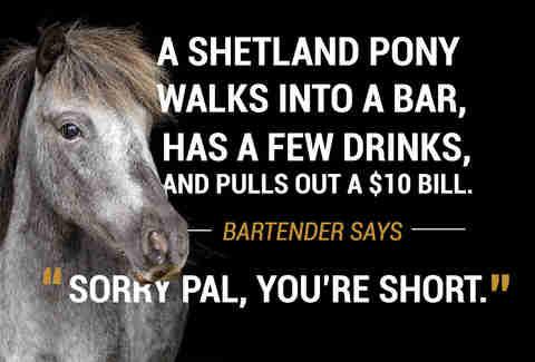 38 Animal Walks Into A Bar Jokes