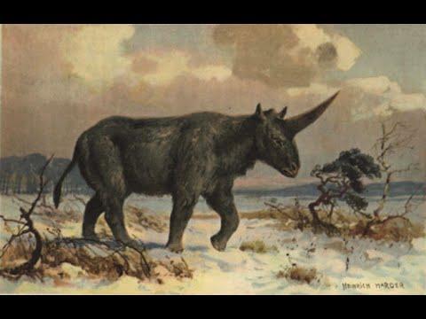Siberian Unicorn Skull Discovered In Kazakhstan