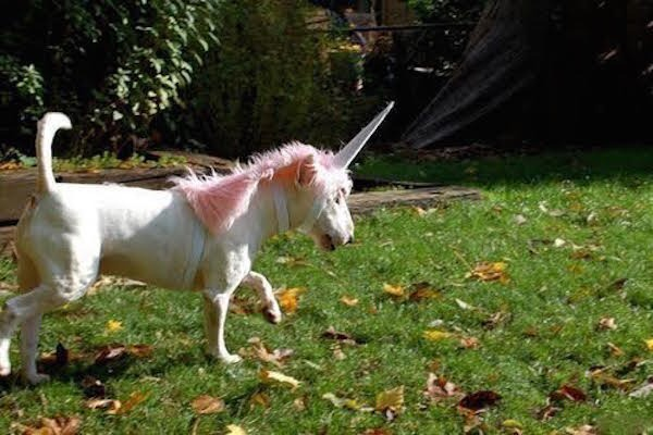 Unicorn Costume For Dogs & Sc 1 St Playpennies