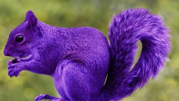 Unicorns And Purple Squirrels  5 Terms Only Recruiters Understand