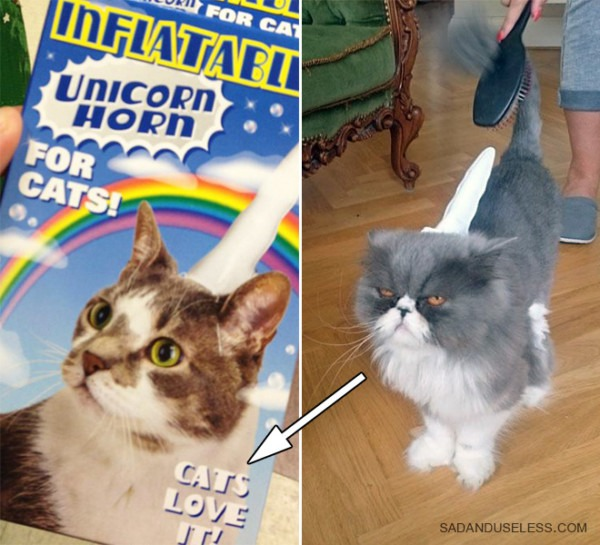 Inflatable Unicorn Horn For Cats  They Love It!