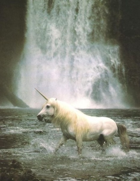 Origin Of Unicorn Myth
