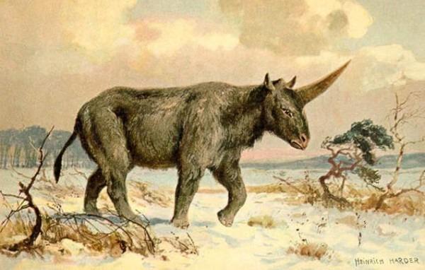 Siberian Unicorn' Walked Earth With Humans