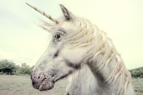 The Unicorn List  There Are Now 131 Startups Valued At $1b Or More