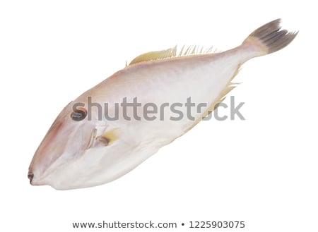 Unicorn Leatherjacket Fish Aluter Monoceros Isolated Stock Photo