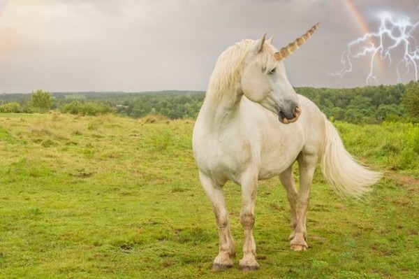 5 Reasons Why Unicorns Have Soared In Popularity