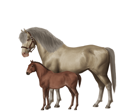 Breed Horses And Create Your Very Own Stable Of Champions • Horse