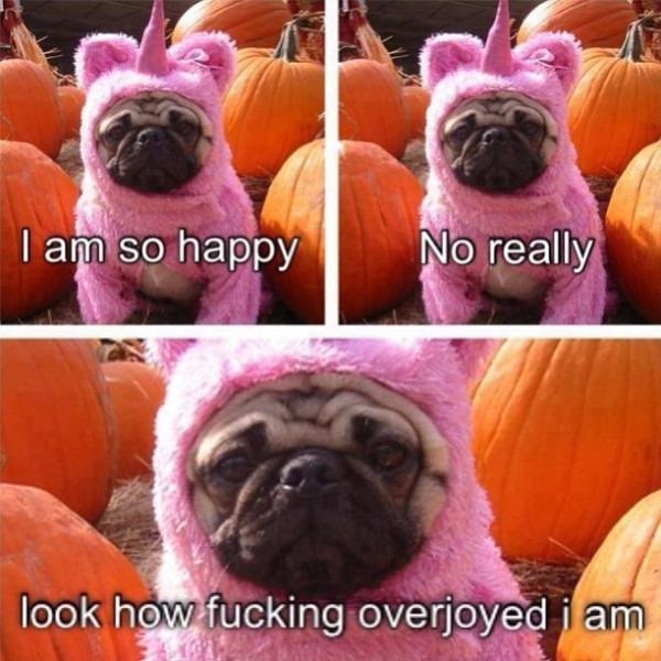 Cute  Pug  Costume  Pumpkins  Pink  Dog  Unicorn  Happy  …