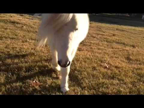 My Pet Unicorn