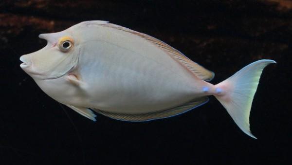 Saltwater Fish For Marine Aquariums