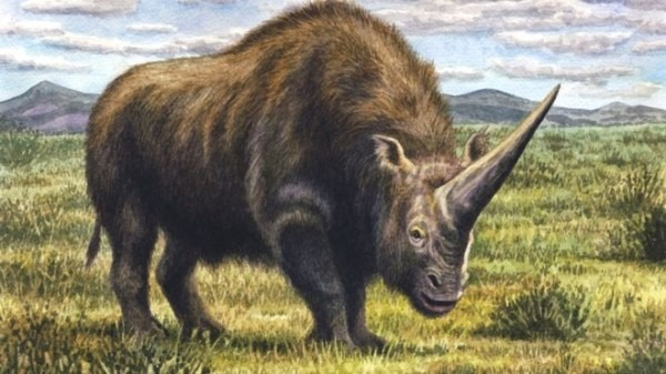 Siberian Unicorn' Walked Earth With Humans