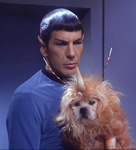Caption This  Spock And The Unicorn Dog [contest]