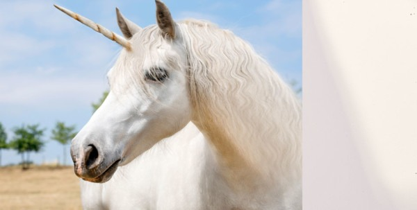 Good News  Unicorns Were Real  Bad News  They Were Hideous