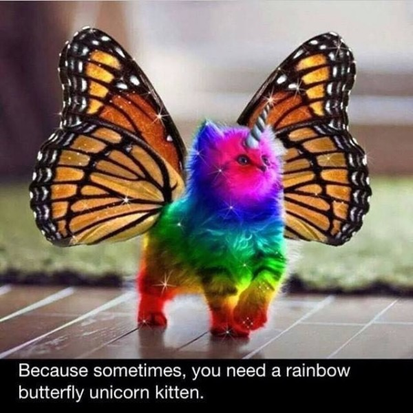 One Man's Funnies  Rainbow Butterfly Unicorn Cat