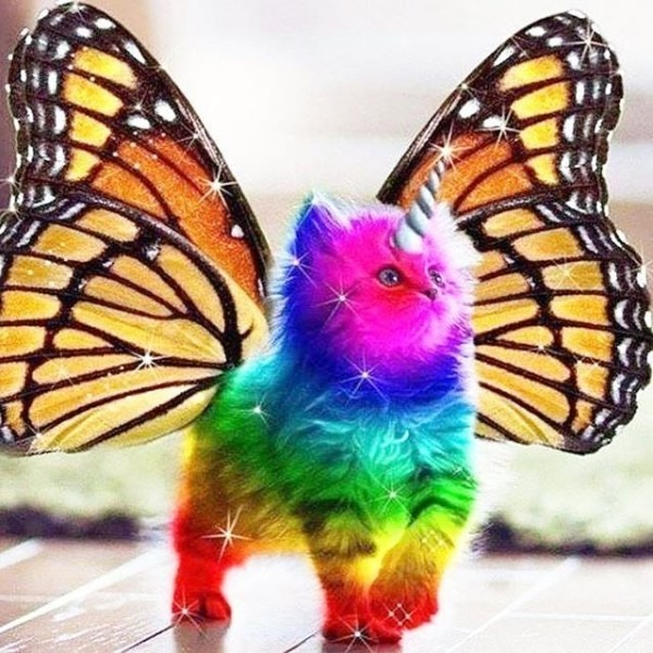 Rainbow Unicorn Butterfly Kitty