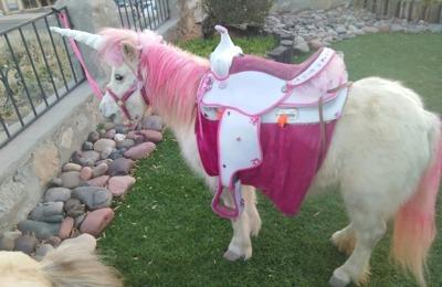Santa Claws Petting Zoo, Pony Rides & Unicorn Princess Parties 207