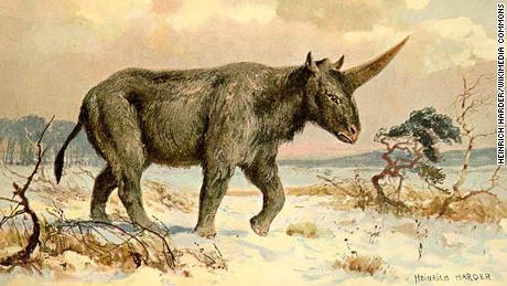 Siberian Unicorn' Once Walked Among Early Humans