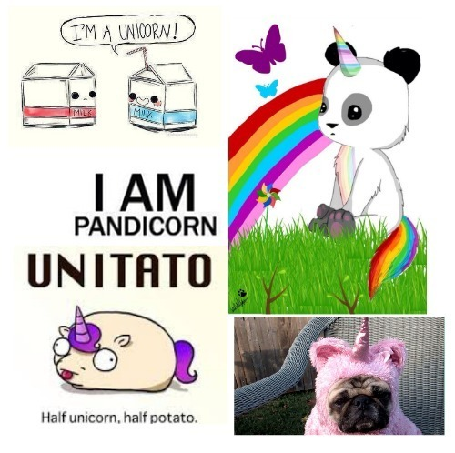 Different Types Of Unicorns  Shared By 💫 On We Heart It