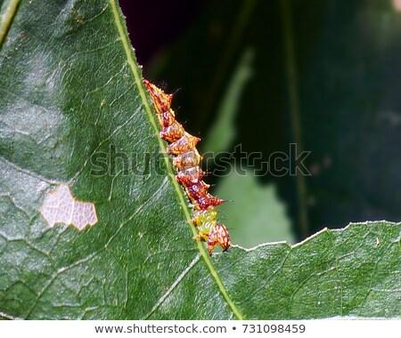 Unicorn Caterpillar Eating Leaf Stock Photo (edit Now) 731098459