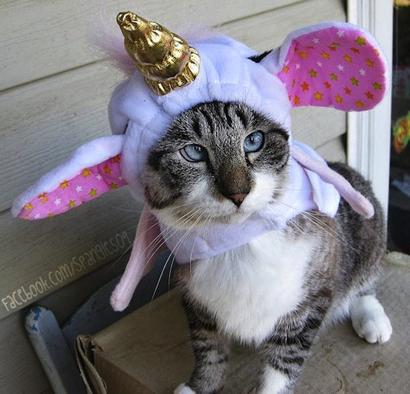 Unicorn Costume For Cats &  Cat Outfits (13)
