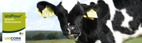 Calf Milk Replacer  Uniflour