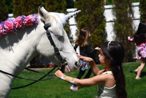 Long Island's Original Lollipop Pony Parties