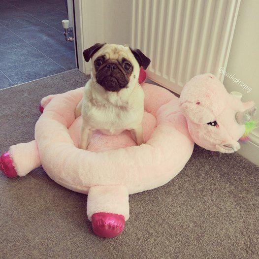 Unicorn Novelty Pet Bed