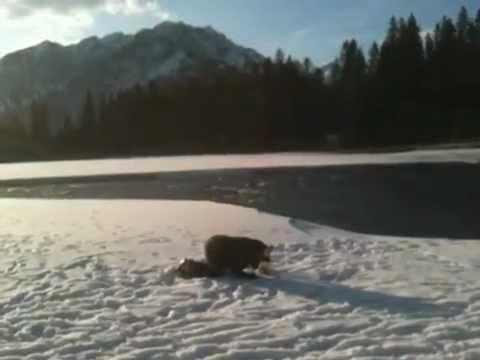 Banff Unicorn Part 2