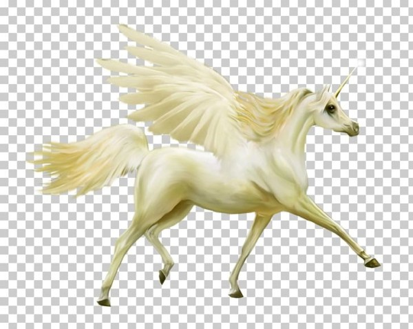Howrse Horse Pegasus Unicorn Png, Clipart, Albom, Computer