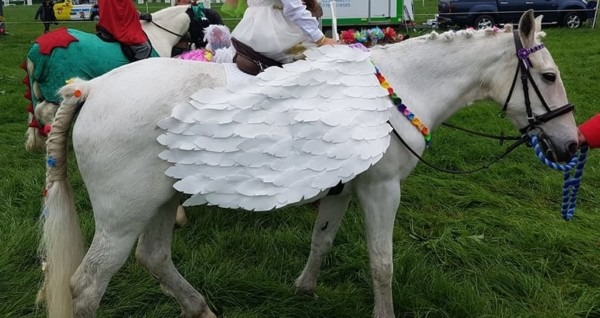Pony Fancy Dress Pegasus Wings, Unicorn Horn And Flower Garlands